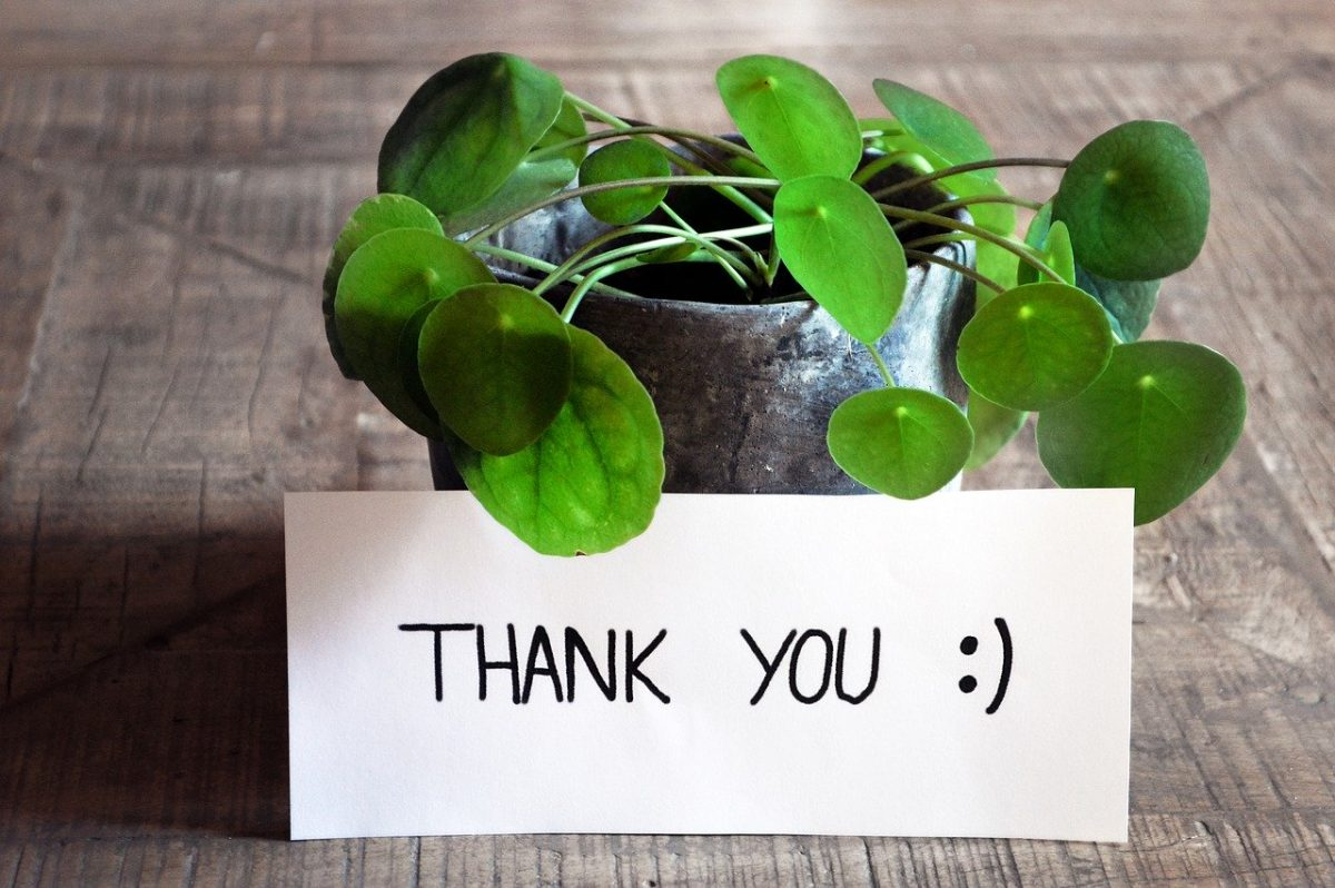 thank you benefits, thank you note and a plant