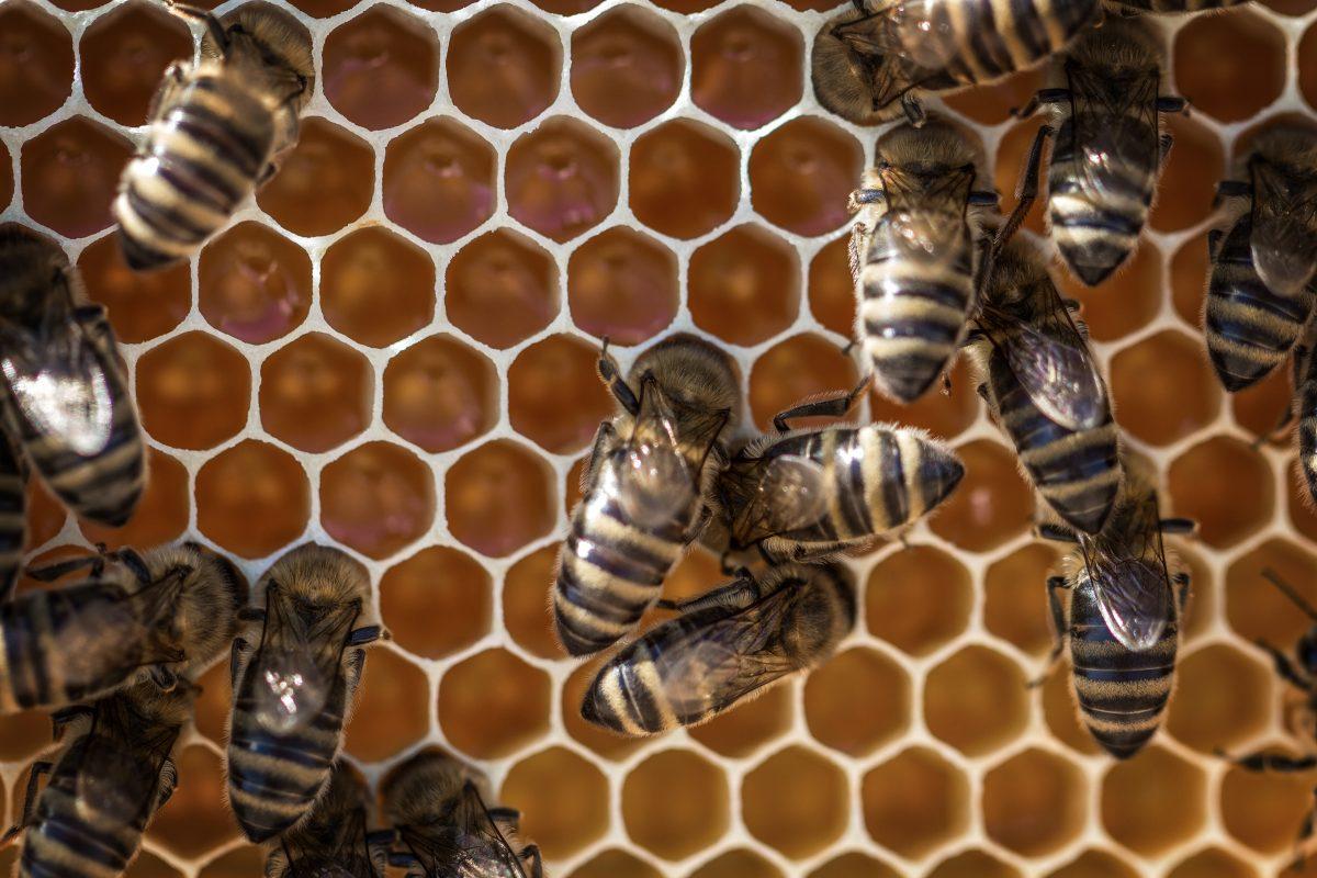 Honeycomb, trypophobia, holes