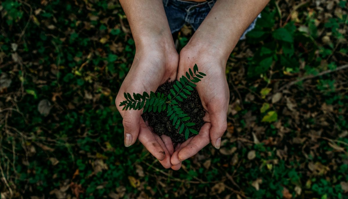 Photo of a green plant in hands